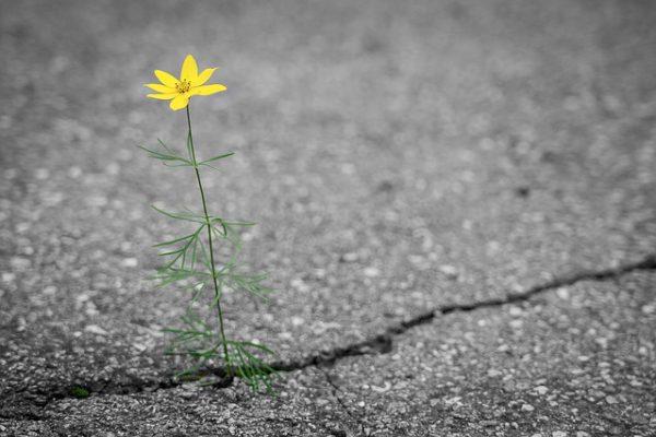 flower-4346049_640
